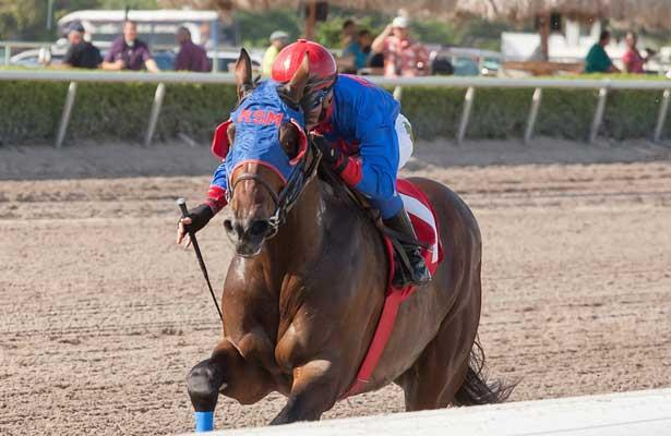 Social Inclusion with Luis Contreras up, wins easily over favorite Honor Code in a 3 year old allowance race at Gulfstream Park, Hallandale Beach Florida. 03-12-2014
