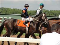 September 15, 2009: Speightstown Son in post parade for Sunny's Halo Stakes at Louisiana Downs.