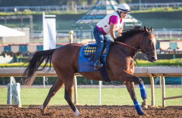 American Pharoah's brother a late scratch in anticipated return