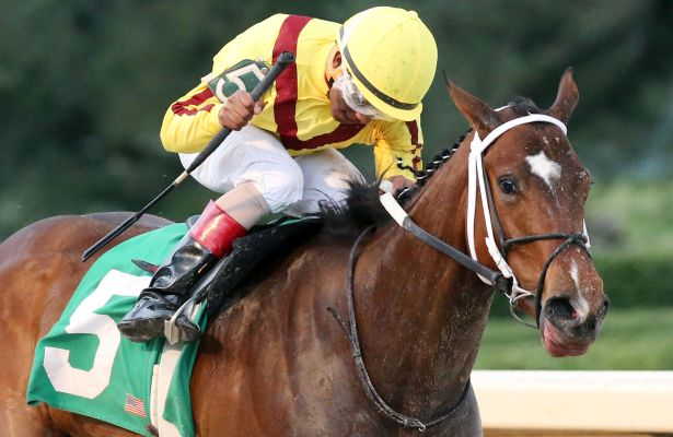 Terra Promessa The Fantasy Favorite Horse Racing Nation