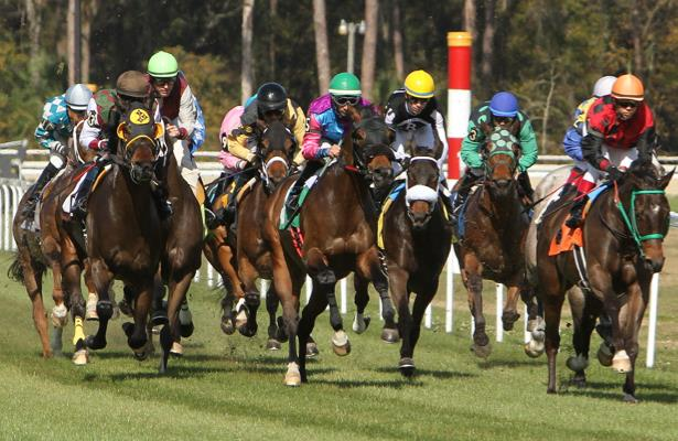 'A huge blow' as Tampa Bay Downs axes stakes, but racing continues