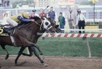1985 Preakness Stakes. Tank's Prospect alongside Chief's Crown just before the wire.