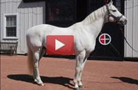 Gainesway Farm: A Visit with Racing Royalty (VIDEO)