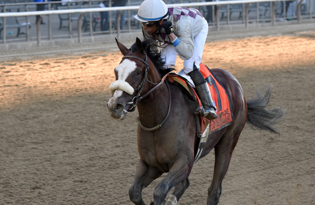 Tiz the Law on championship chase in Kentucky Jockey Club