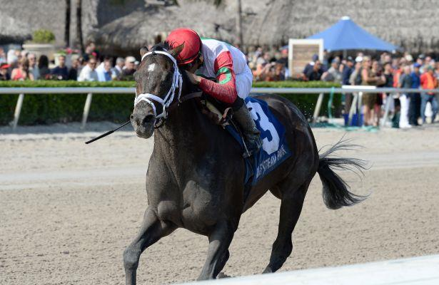 Tommy Macho returns to Gulfstream for 5-year-old debut in Hal's Hope