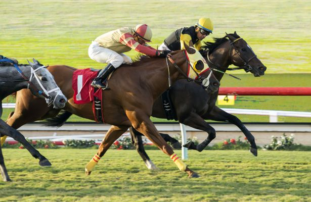 Tribalist wins 2017 Green Flash Handicap
