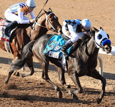 Twice The Appeal captures the 2011 Sunland Derby