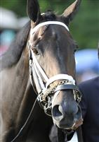 Unbridled Belle in the paddock before the 2009 Personal Ensign