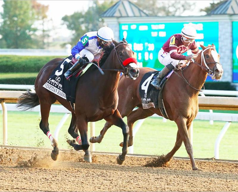 Venetian Harbor holds on to win Raven Run; Breeders' Cup next