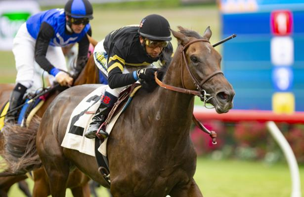 Vexatious, True Timber work towards Breeders' Cup for Sisterson