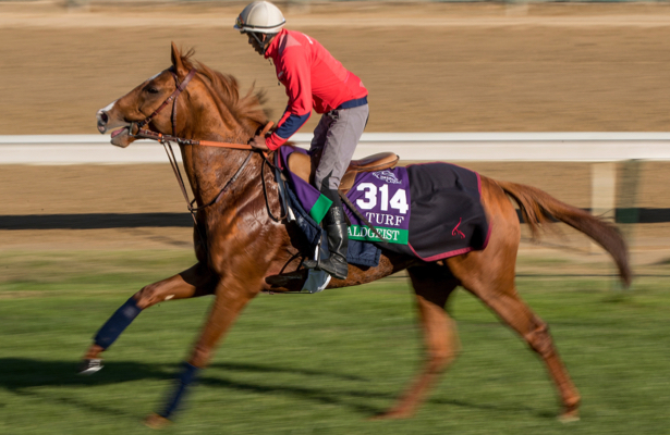 Waldgeist Returns From Flat Breeders Cup Effort In Hong