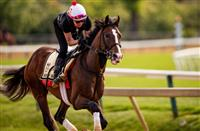 War of Will 'building up his energy' for Belmont Stakes run