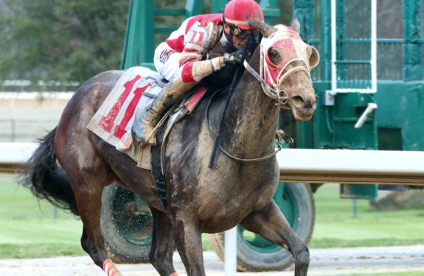 Whoa Nellie aims for an Oaklawn repeat in the Bayakoa Stakes