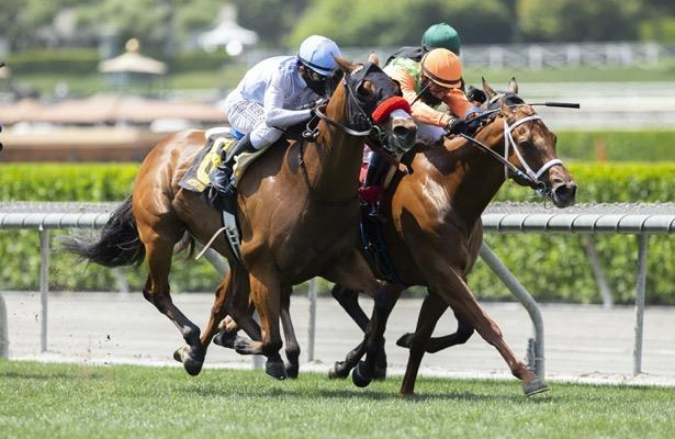 Wildman Jack nabs Santa Anita's Daytona Stakes in a photo