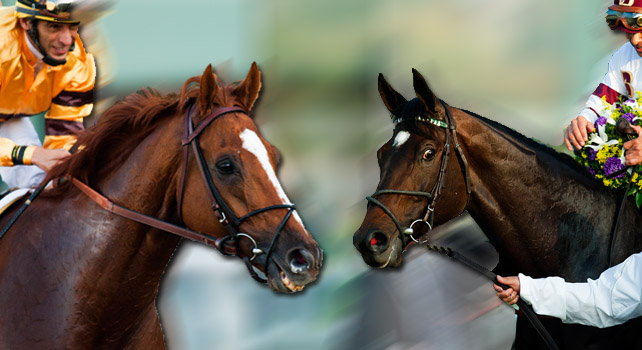Wise Dan vs Royal Delta for Horse of the Year!