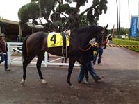 First race at Santa Anita