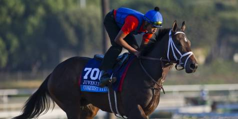 Conquest Titan training for the Breeders' Cup Juvenile at Santa Anita Park.
