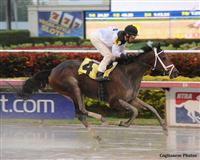 Got Lucky wins a Maiden Special Weight Race at Gulfstream Park with John Velazquez in the irons.