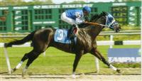 My retired racehorse, Abatares, passing the winning pole at Tampa Bay Downs