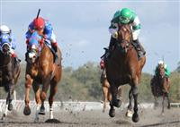 Prudhoe Bay wins the OBS Sprint Stakes at Ocala Training Center.