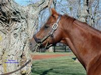 Red Giant at Three Chimneys Farm
