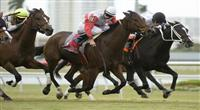 10 January 2010: Quiet Harbor (gray) and Jockey Eddie Castro battle Romacaca (orange) to win the Marshua's River Stakes at Gulfstream Park in Hallandale Beach, FL.