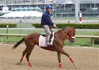 Rose To Gold gallops at Churchill Downs Racetrack in preparation for the 2013 Kentucky Oaks.