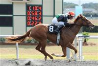 Ruslana wins the 2013 OBS Sprint Stakes at Ocala Training Center.