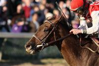 Sassy Image captures the 2009 Golden Rod Stakes