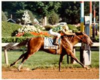 1990 Preakness winner Summer Squall