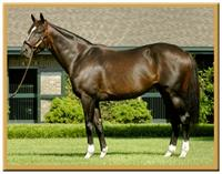Stallion Tiznow stands at Taylor Made