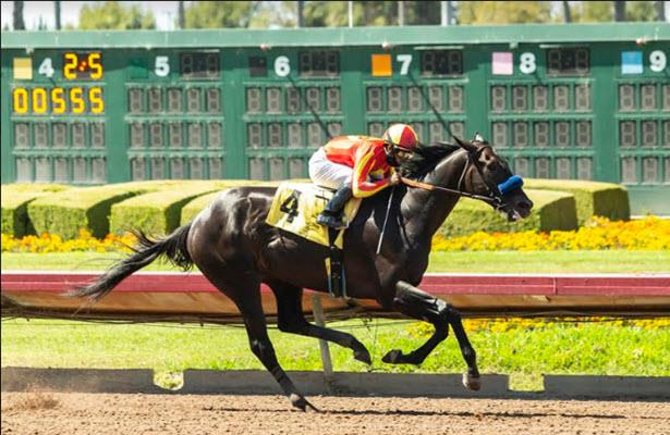 Uncle Chuck takes Los Alamitos Derby to stay perfect